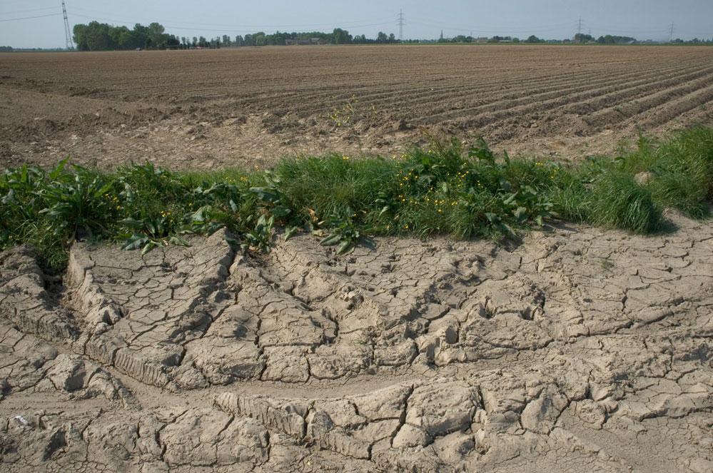 Sécheresse en Flandre : espérer la pluie ne suffit plus