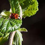 Nieuwe beweging: Red de biodiversiteit, samen en nu!