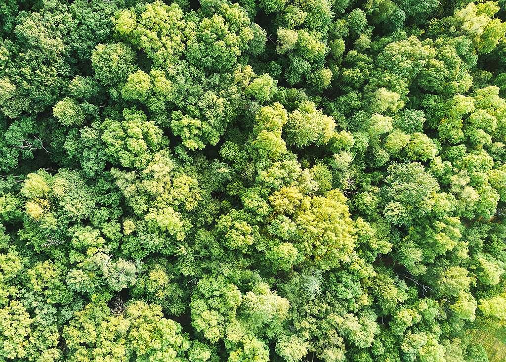 """Planter des arbres pour lutter contre la """"honte de prendre l'avion"""" ?"""