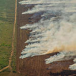 Nombre record d'incendies en Amazonie, bien avant le pic annuel