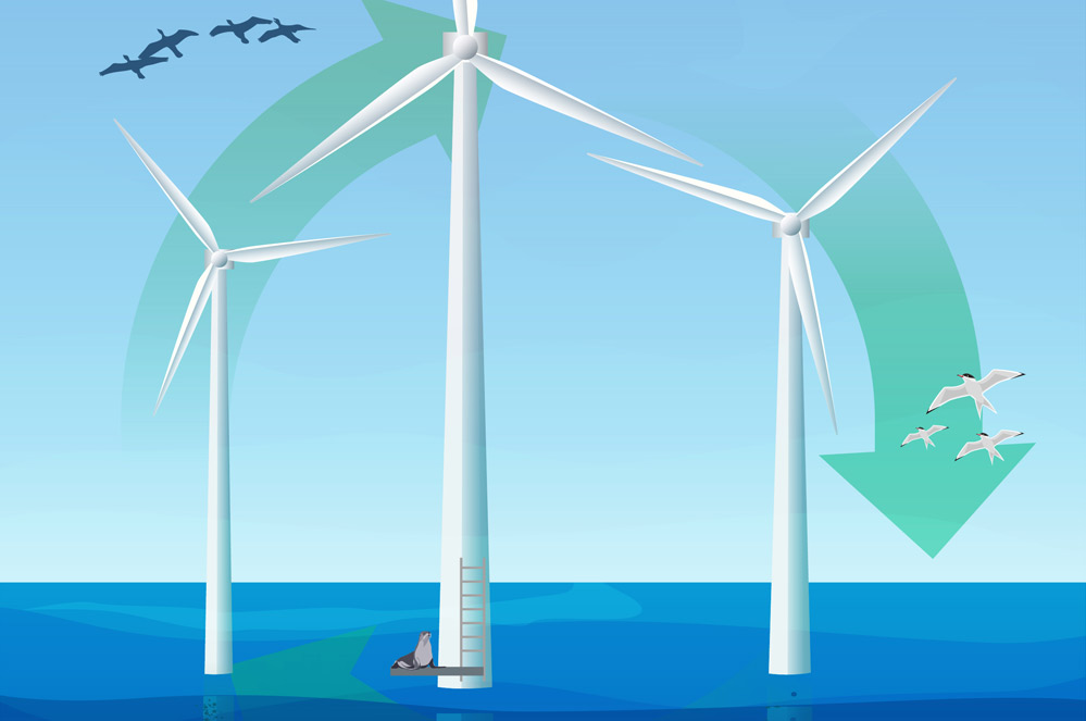 Natuur in offshore windparken