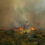 Amazonewoud brandt: Greenpeace maakt nieuwe luchtfoto's