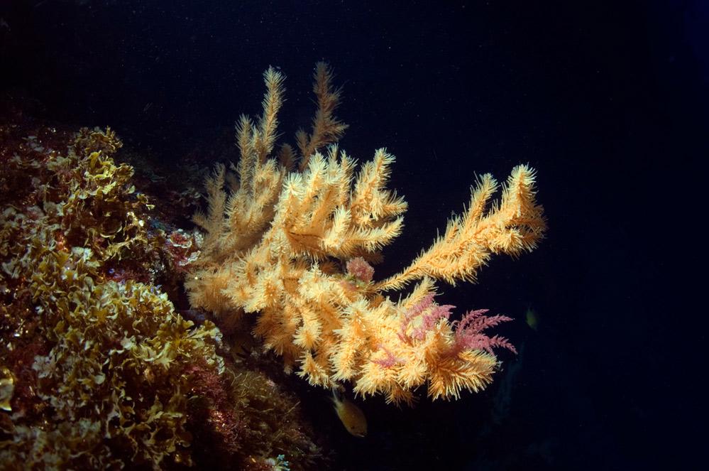 Test d'exploitation minière dans les eaux profondes du Pacifique : la réponse de DEME