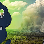 As Árvores Somos Nozes 42 – O maior desmatamento em doze anos