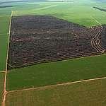 Área desmatada dentro de fazenda de soja monitorada pelo Grupo de Trabalho da Soja.