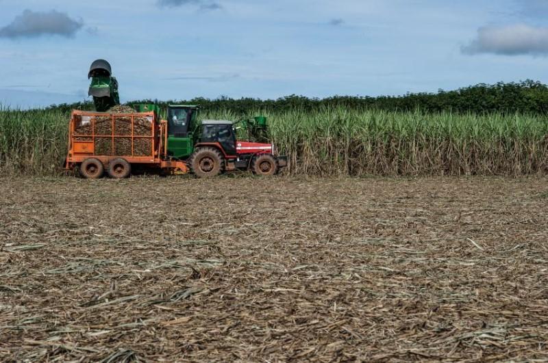 Colheita de cana-de-açúcar no Mato Grosso.