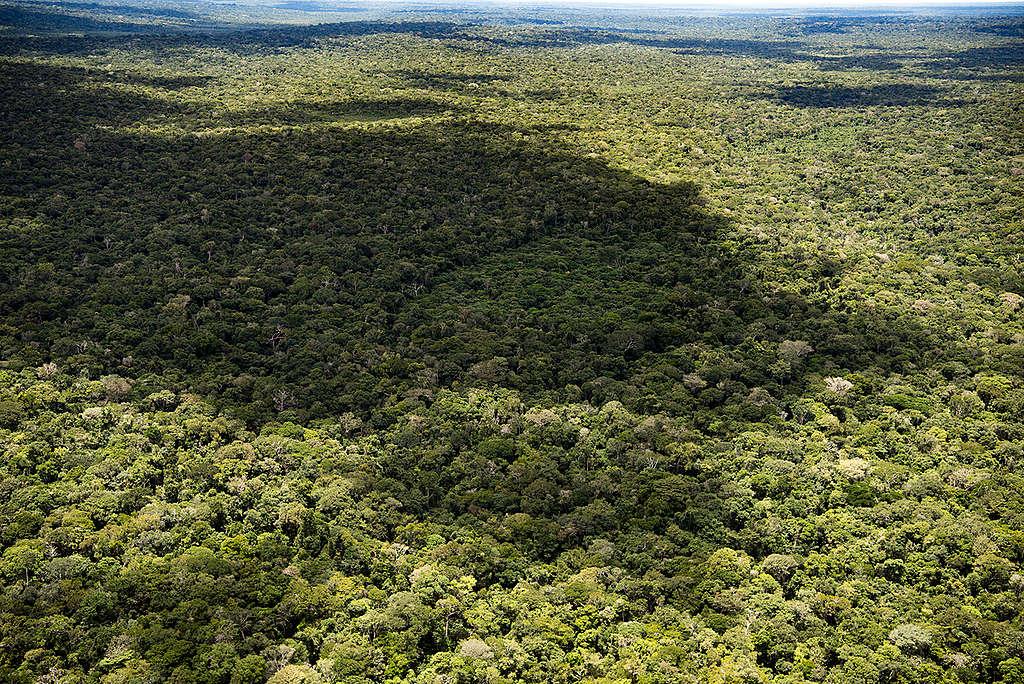 Floresta completamente preservada dentro da área a ser reduzida na Floresta Nacional do Aripuanã.