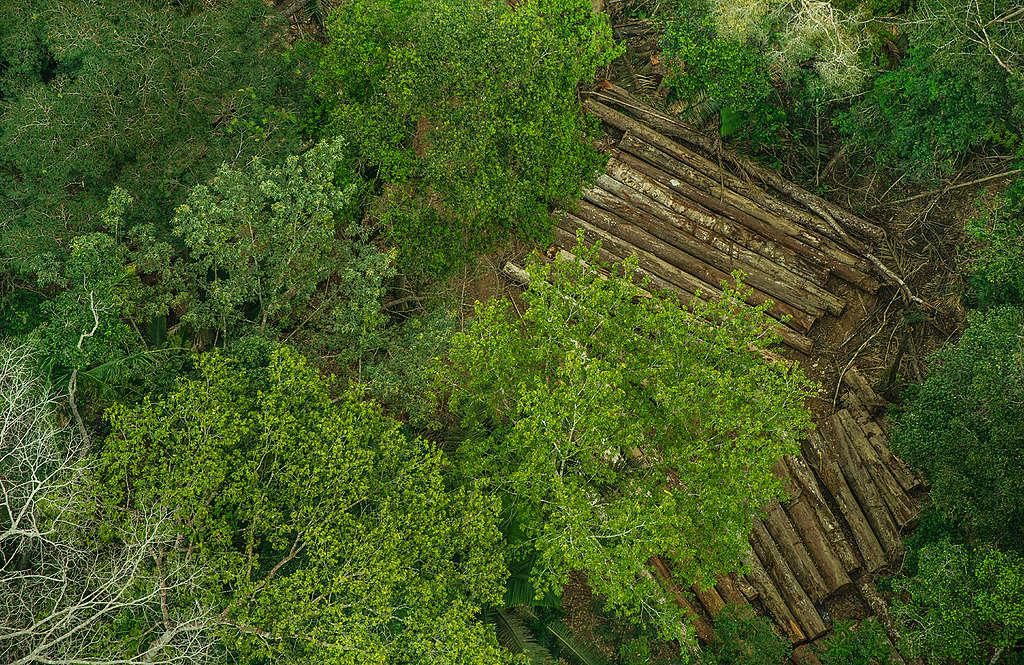 A invasão e o roubo de madeira na Terra Indígena Karipuna (RO) têm aumentado de modo vertiginoso