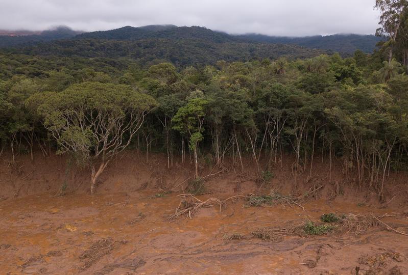 A lama tóxica da Vale inundou com quase 13 milhões de m³ o distrito de Córrego do Feijão, em Brumadinho, matando a vegetação próxima
