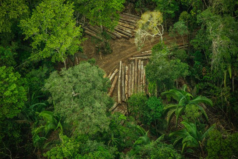 A Terra Indígena Karipuna, em Rondônia, vem sendo rapidamente destruída pela invasão de madeireiros e grileiros, ameaçando os indígenas que moram ali.