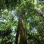Floresta próxima ao Rio Tapajós. © Valdemir Cunha / Greenpeace