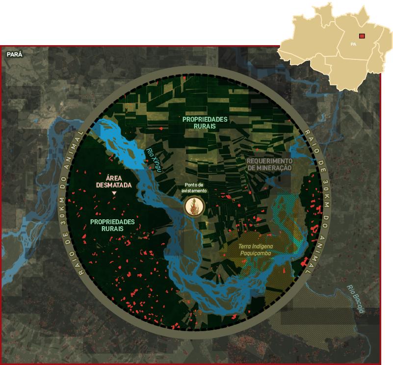 Mapa bromélia