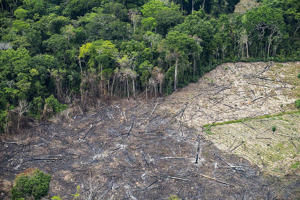 Alertas de desmatamento disparam na Amazônia - Greenpeace Brasil
