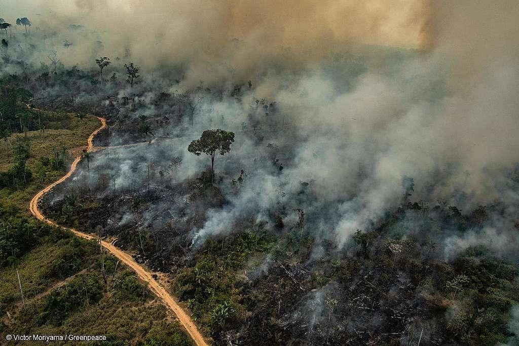 Imagem mostra floresta destruindo e queimando, em Altamira, no Pará.