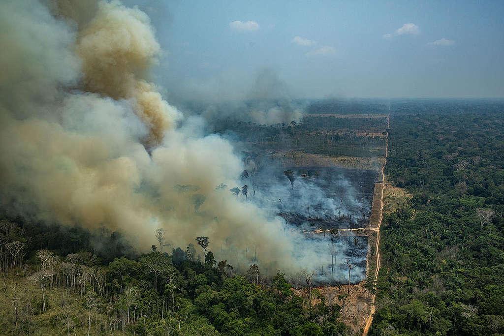 floresta com fogo criminoso