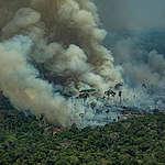 fogo na floresta em Rondônia