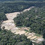Três áreas protegidas concentram 55% do  desmatamento para garimpo na Amazônia