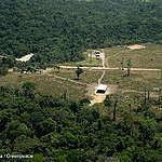 Datafolha: plantar árvores é a solução para o desmatamento na Amazônia?