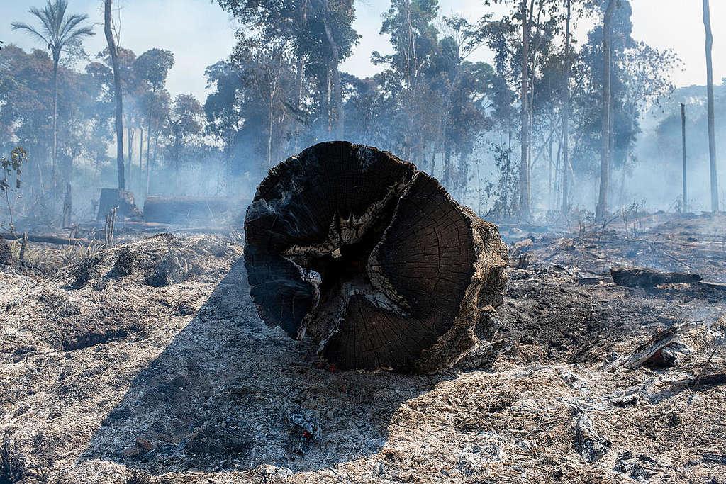 Imagem mostra tronco de árvore derrubado e queimado, com desmatamento ao fundo e muita fumaça