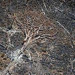 Desmatamento na Amazônia é o maior desde 2008, segundo dados do PRODES