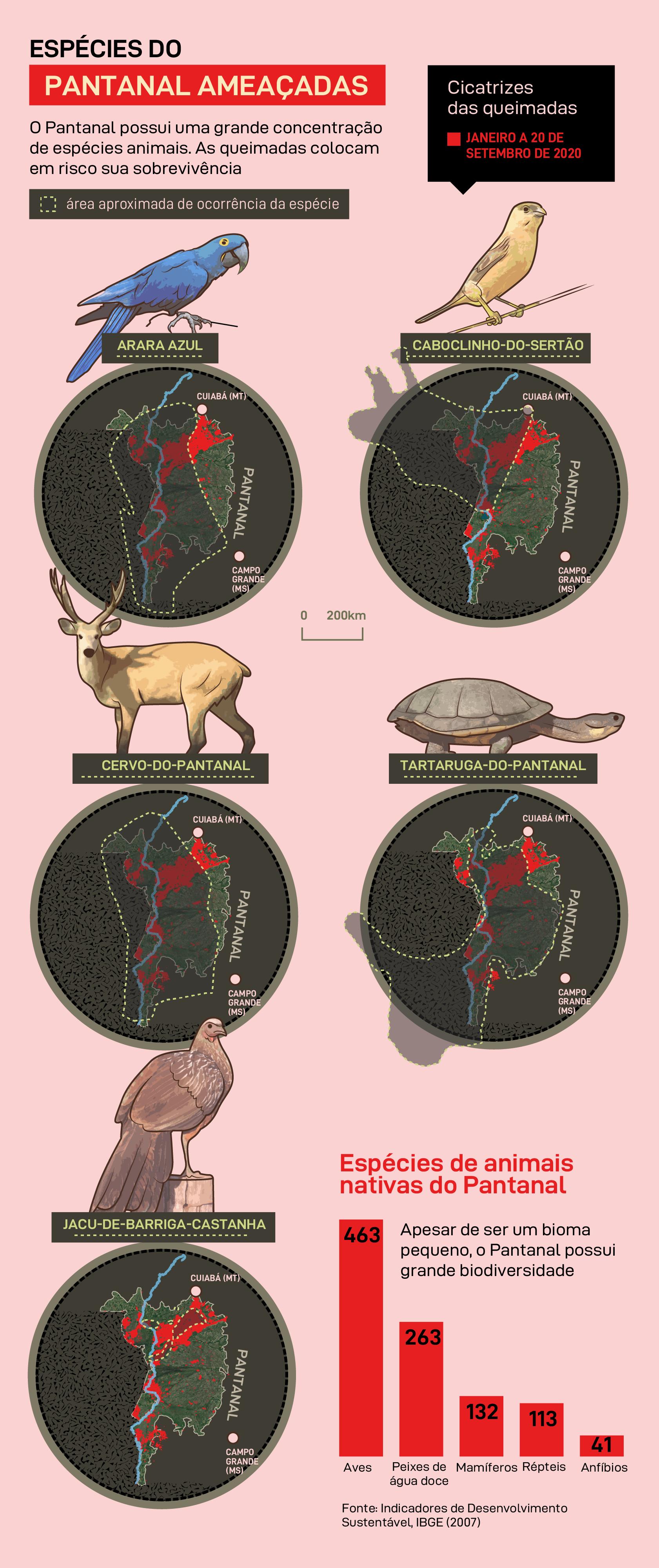 Espécies do Pantanal ameaçadas