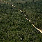 Em uma região rica em biodiversidade da Amazônia, florestas públicas não destinadas seguem vulneráveis ao avanço do desmatamento e da grilagem.  A fazenda Vô Manoel foi registrada em uma dessas áreas pertencentes à União, no município de Novo Progresso (PA), onde entre fevereiro e março de 2020, foram desmatados 1.700 hectares de floresta. © Christian Braga / Greenpeace