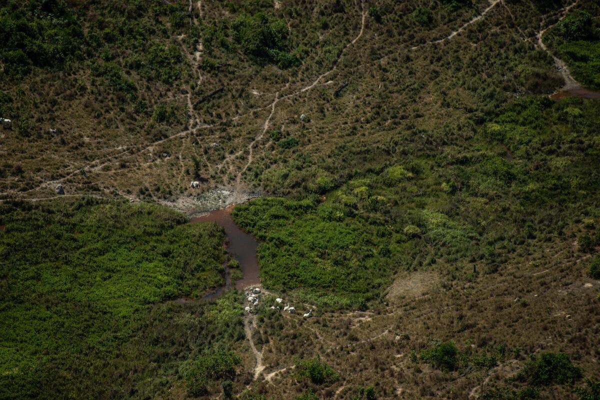 Desmatamento de 1.700 Hectares na APA Jamanxim na Amazônia. © Christian Braga / Greenpeace