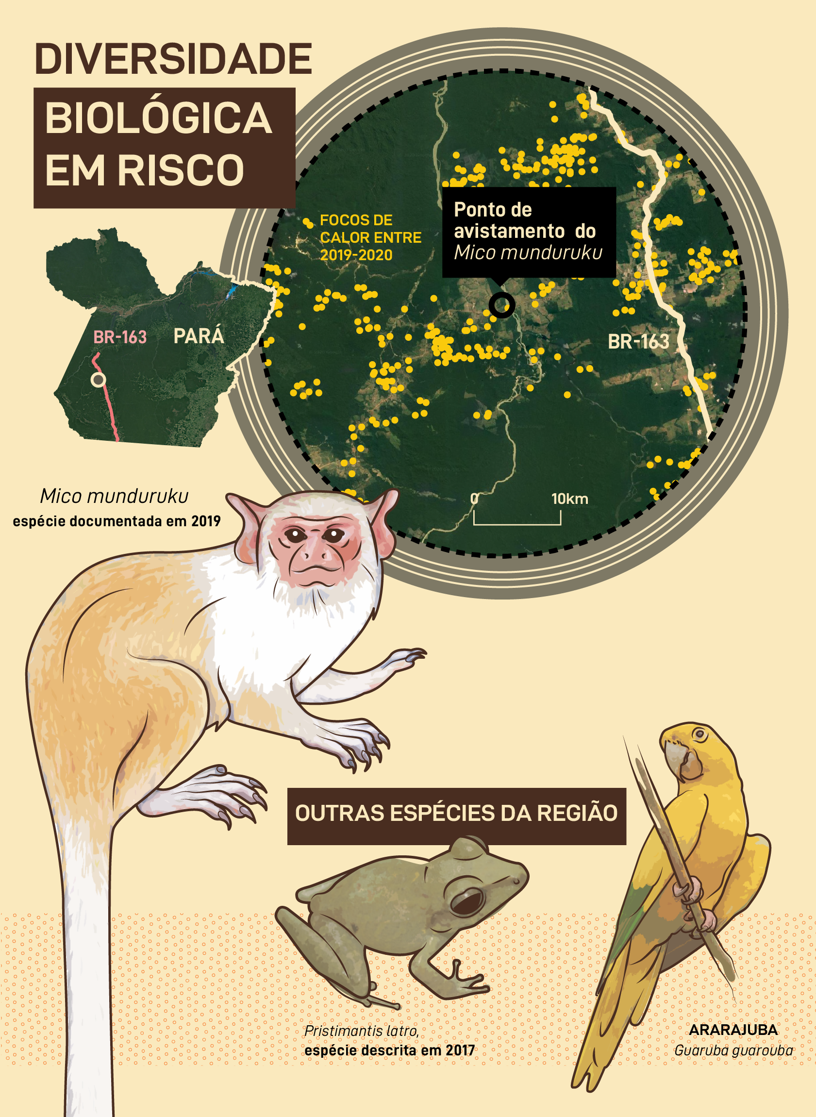 Diversidade biológica em risco