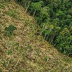 Impunidade e descaso do governo estimulam venda da Amazônia pela internet