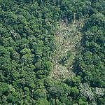 Voluntários aproveitam Dia Nacional de Proteção das Florestas Brasileiras para falar da Mata Atlântica