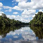 Desmatamento e degradação florestal colocam nossa biodiversidade em risco