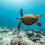 Poluição dos Oceanos e extinção da vida marinha: o que nossos hábitos têm a ver com isso?
