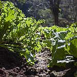 O papel da agroecologia em um país que já sente a crise climática no campo, no bolso e no prato