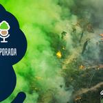 As Árvores Somos Nozes 49 – Amazônia: temporada de queimada não existe!