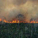 Greenpeace sobrevoa a Amazônia e flagra o avanço do fogo sobre a floresta