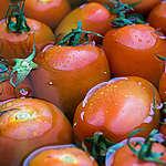 ilustrativa: tomates imersos na água