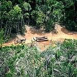 Trator e caminhão carregados de madeira são flagrados na TI Karipuna