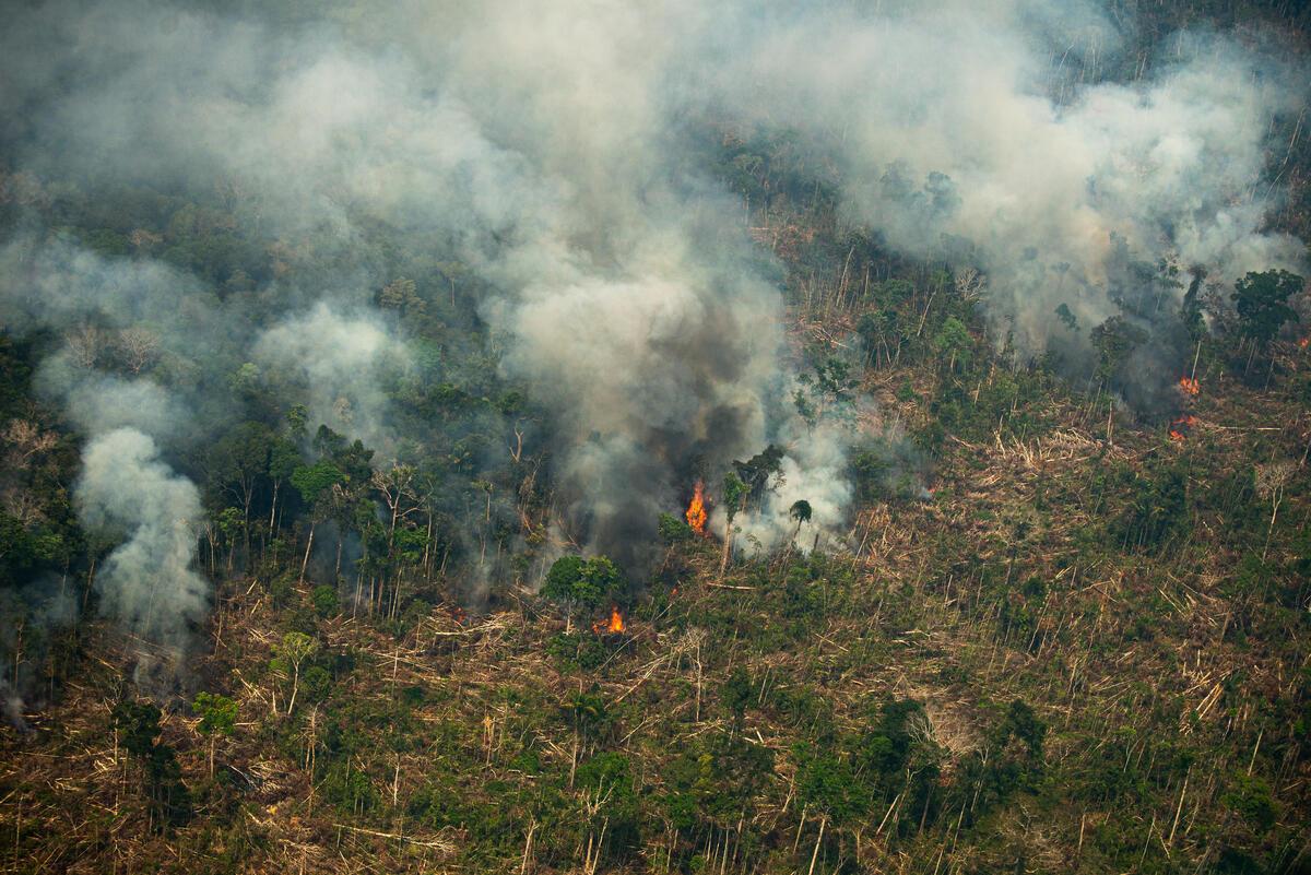 Em 2020, alertas de desmatamento na Amazônia alcançam níveis alarmantes