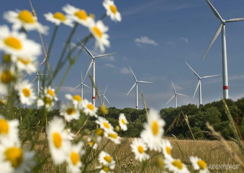 Copyright Paul Langrock Agentur Zenit. Auf der Fuchskaute, Hoher Westerwald, mit 657 Meter die hoechste Erhebung im Westerwald und beliebtes Ausflugsziel fuer Touristen, Wanderer, hat die Fuhrlaender AG zusammen mit dem regionalen Energieversorger KEVAG 12 Windkraftanlagen mit jeweils 1, 5 MW Megawatt Leistung errichtet. Windkraft, Windkraftanlage, Windpark, Windkraftpark, Windenergie, Windrad, Windraeder, Windenergieanlage, WKA, Rotorblatt, Rotorblaetter, Gondel, Strom, Elektrizitaet, Megawatt, Kilowattstunden, erneuerbare, regenerative, alternative Energie, Fauna, Flora, Gaenseblume, Gaensebluemchen, Wiese, Gras, Joachim Fuhrlaender. Waigandshain. 16. Juli 2005
