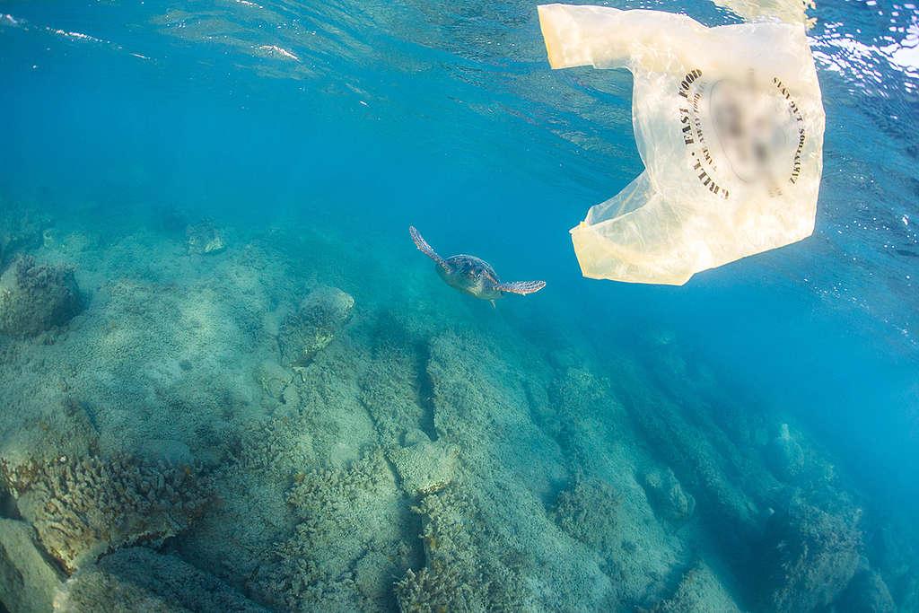 Пластмасова торбичка, плаваща във водите на залив Лаганас, Гърция. © Костас Папафицорос/ Greenpeace