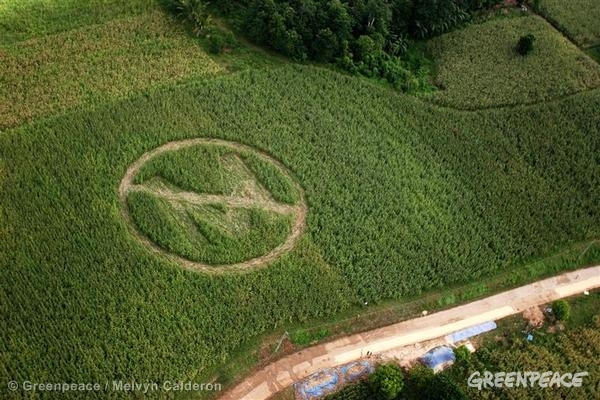 GE Crop Circle Action Against GM Corn (Philippines: 2006)
