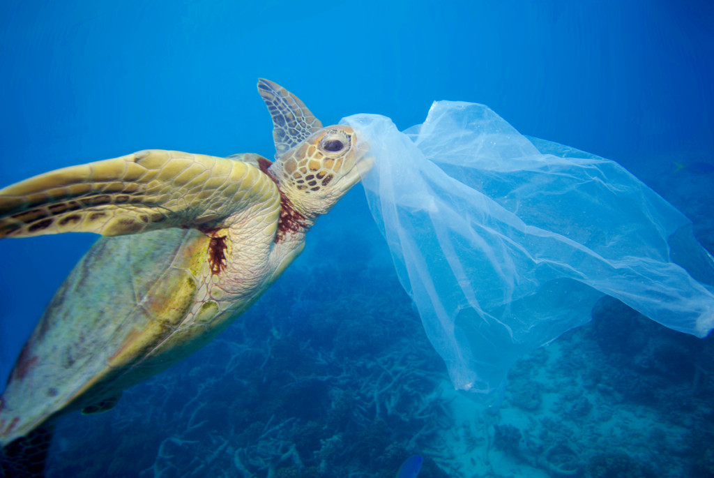 Turtle and Plastic in the Ocean