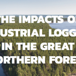 The Impacts of Logging in the Great Northern Forest