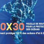 30X30 : Comment protéger 30% des océans d'ici 2030