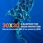 Thumbnail 30X30 Blueprint Ocean Protection