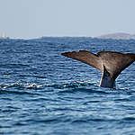 Greenpeace welcomes Canada's membership in the Global Ocean Alliance, 30×30 pledge