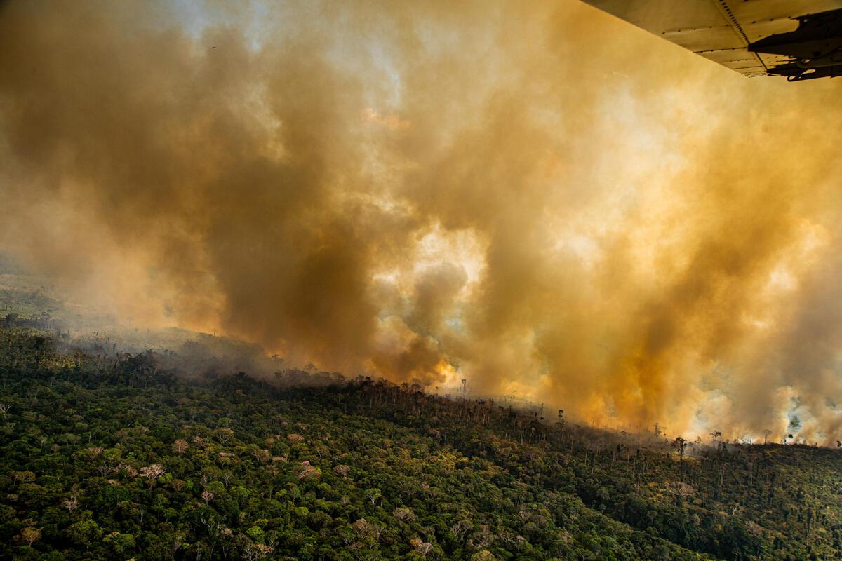 L'Amazonie en feu