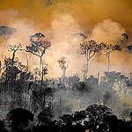 Greenpeace Canada demande au gouvernement canadien de rejeter l'invitation à une tournée de greenwashing en Amazonie
