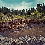 forest foret bois wood