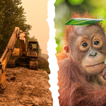 Say no to a deal in palm oil deforestation